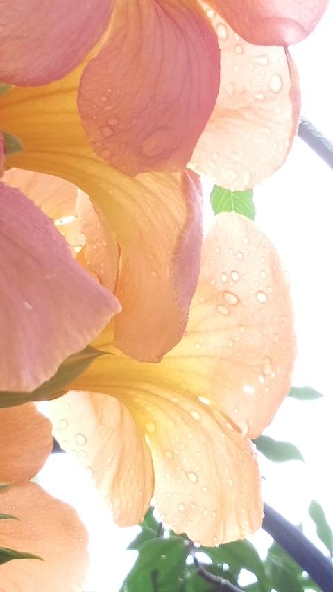 晴れ時々雨_f0155808_10361035.jpg