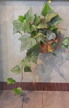多肉植物リース・風鈴の新入荷のご案内_d0263815_15224426.jpg