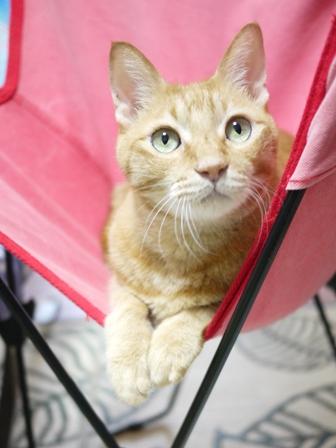 猫のお友だち ちゃーくんちょびくんペコちゃん編。_a0143140_23523675.jpg