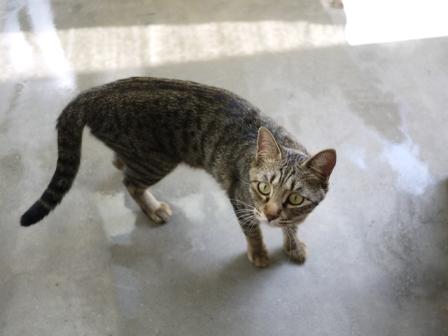 猫のお友だち ちゃーくんちょびくんペコちゃん編。_a0143140_23585549.jpg
