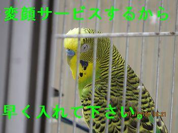f0196665_1426250.jpg