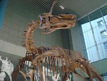 恐竜展 at 丸の内_d0006467_1919448.jpg