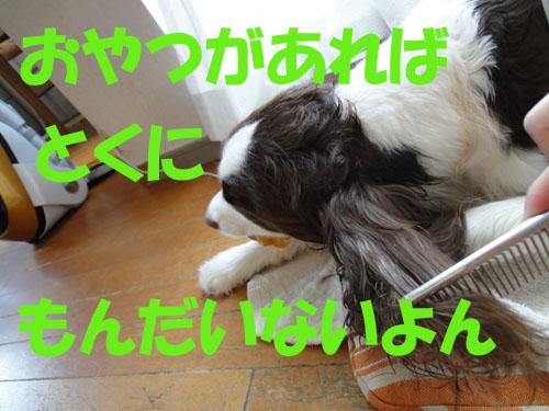 b0204977_207293.jpg