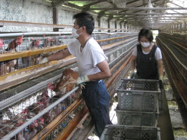 鶏の出荷_d0139806_1812741.jpg