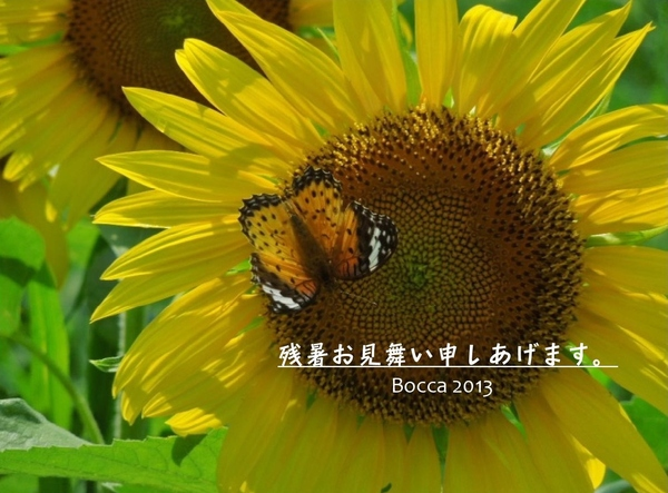 「残暑お見舞い  2013」_a0120513_2184449.jpg