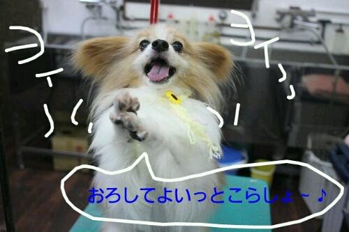 b0130018_19175260.jpg