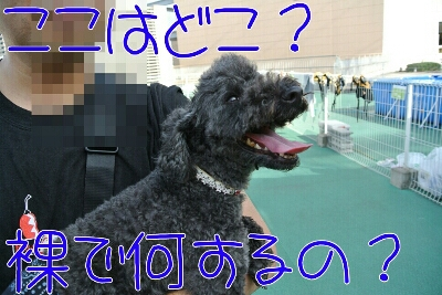 b0236618_1853873.jpg