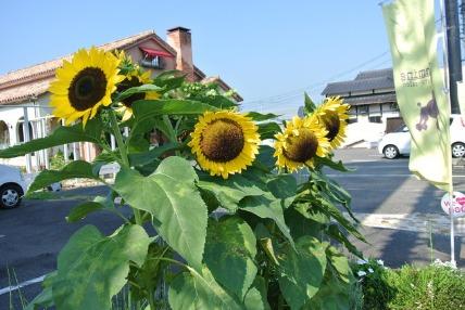 08/07 お散歩01_e0236430_15563331.jpg