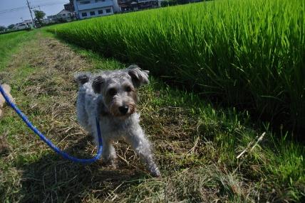 08/07 お散歩01_e0236430_15565429.jpg