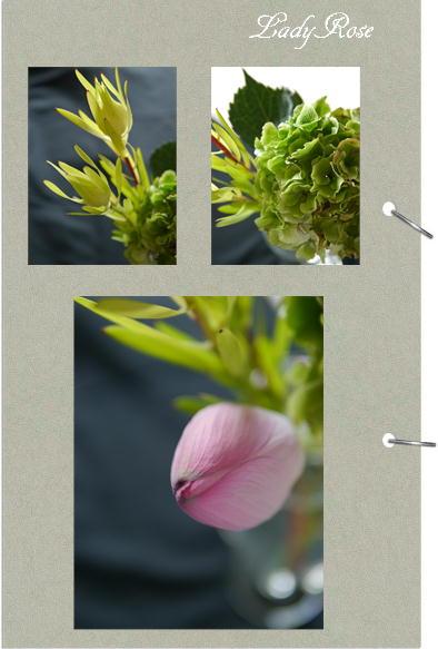 紫陽花&ミニバラ_f0292335_1601452.jpg