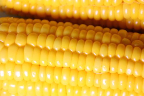 夏は冷たい蕎麦でシャキッ! 8月7日_f0113639_18581124.jpg