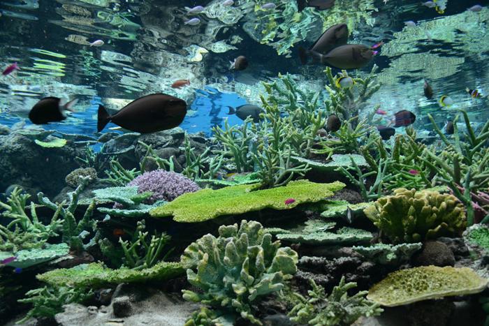 名古屋港水族館_e0171573_0194278.jpg