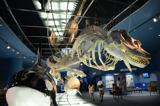 名古屋港水族館_e0171573_0204129.jpg