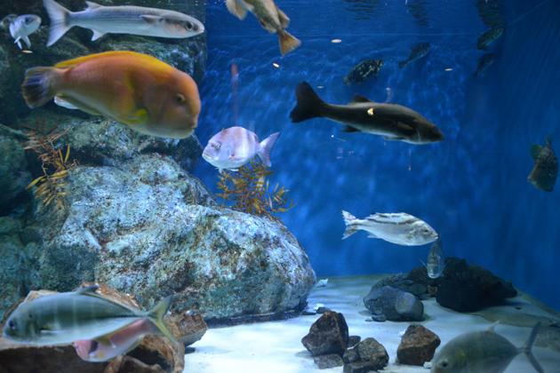 名古屋港水族館_e0171573_0211770.jpg