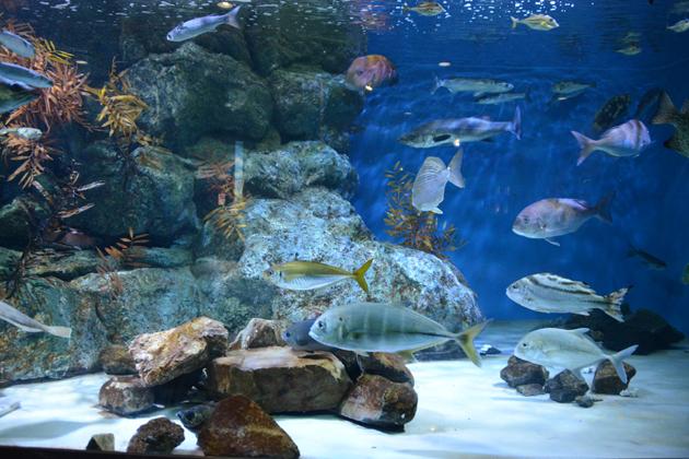 名古屋港水族館_e0171573_0212465.jpg