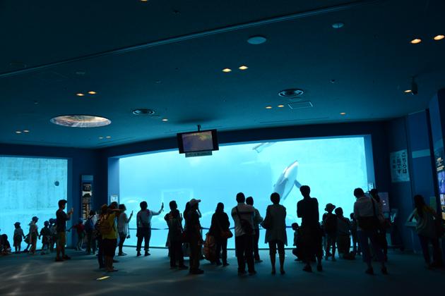 名古屋港水族館_e0171573_0213112.jpg