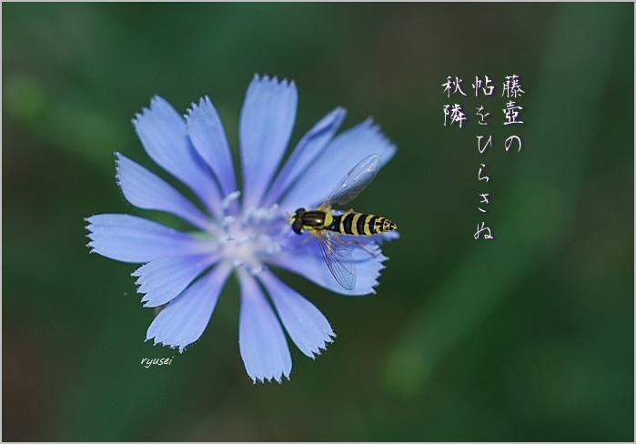 f0053297_136379.jpg