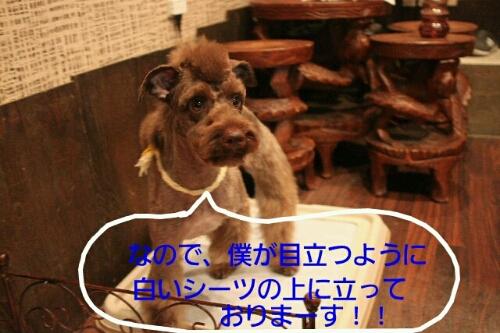 b0130018_22293167.jpg