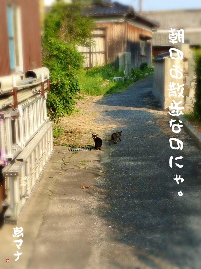 f0183846_21361390.jpg