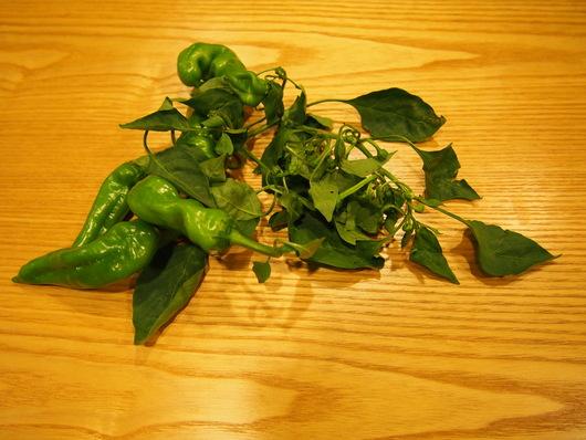 このお野菜は。。_e0237660_18351051.jpg