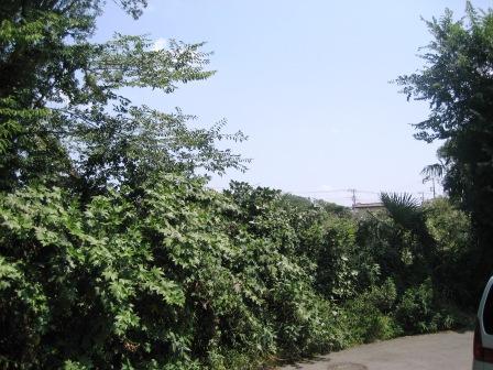 暑さ厳しく、ところによっては、大雨・雷・・・・・・_c0206545_158790.jpg