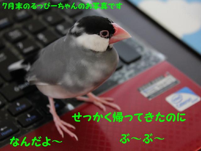 b0158061_202763.jpg