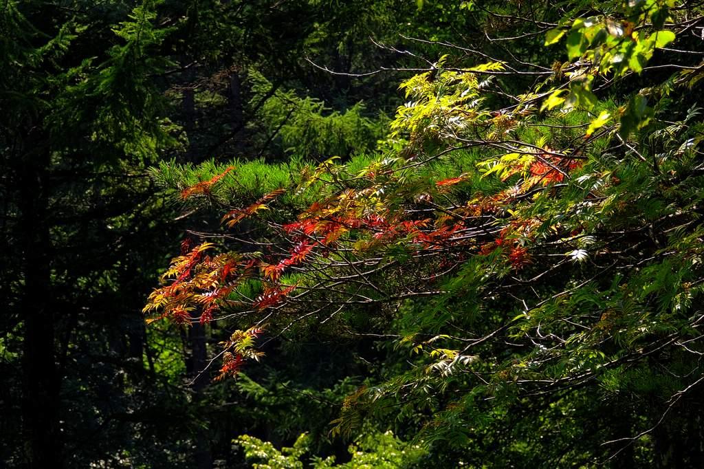 夏のアカハラ/モズ/山は秋景色/天の川_b0024798_22412582.jpg