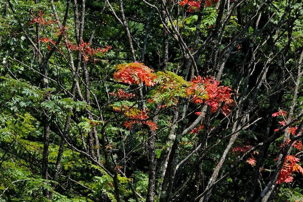 夏のアカハラ/モズ/山は秋景色/天の川_b0024798_2241586.jpg