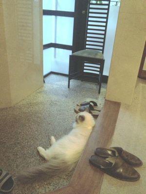 猫だけど留守番は嫌よ_c0050400_174862.jpg