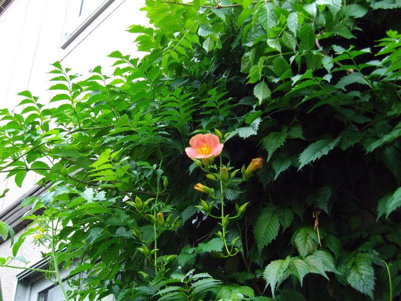 午前中は庭仕事、夕方は大通りビアガーデン_c0025115_23273066.jpg