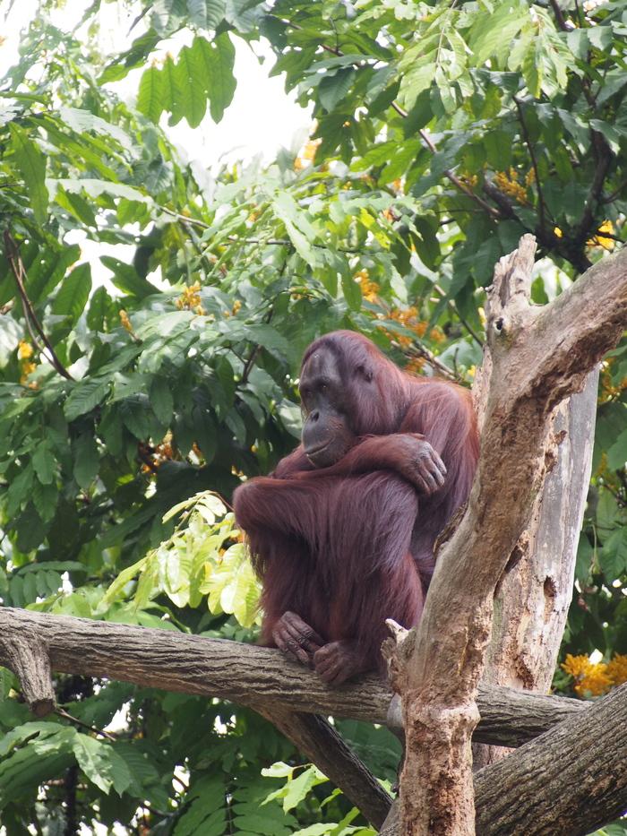 2013 7月 シンガポール(16) シンガポール動物園 和むな〜_f0062122_9483612.jpg