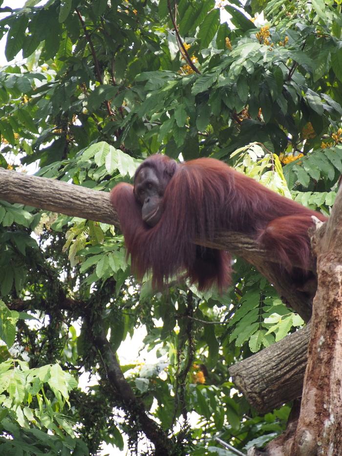 2013 7月 シンガポール(16) シンガポール動物園 和むな〜_f0062122_9494581.jpg