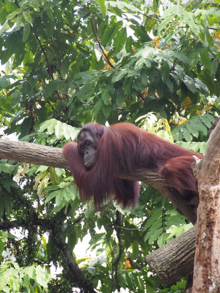 2013 7月 シンガポール(16) シンガポール動物園 和むな〜_f0062122_9505312.jpg