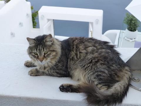 世界の猫 写真館 ギリシャ サントリーニ島_e0237625_20552750.jpg