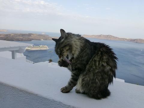 世界の猫 写真館 ギリシャ サントリーニ島_e0237625_2056197.jpg