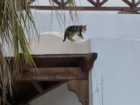 世界の猫 写真館 ギリシャ サントリーニ島_e0237625_20565779.jpg
