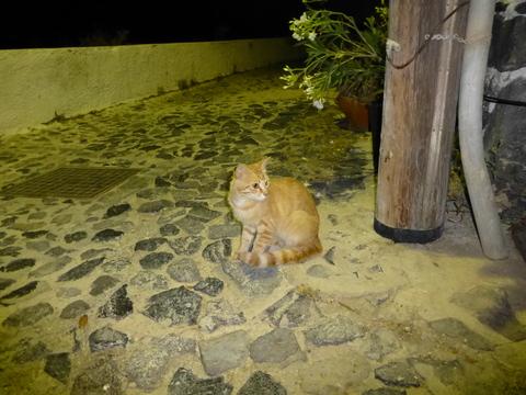世界の猫 写真館 ギリシャ サントリーニ島_e0237625_21212362.jpg
