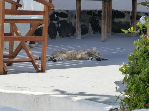 世界の猫 写真館 ギリシャ サントリーニ島_e0237625_2155515.jpg