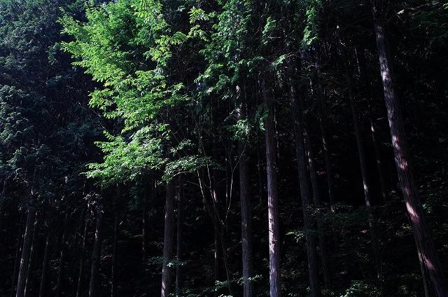 八ヶ岳極熱ツーリング by RICOH GRデジタル_f0050534_1824510.jpg