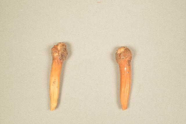 マンモスの赤ちゃん骨格標本  Yuka展_f0050534_9365939.jpg