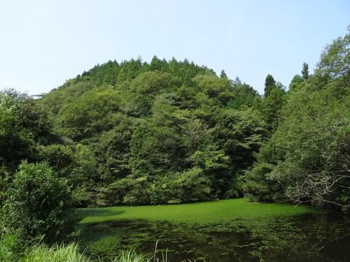 入口谷筋の草刈り  in  孝子の森_c0108460_16503318.jpg