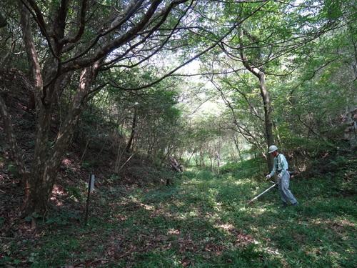 入口谷筋の草刈り  in  孝子の森_c0108460_1705751.jpg
