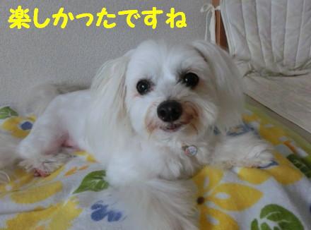 b0193480_1643732.jpg