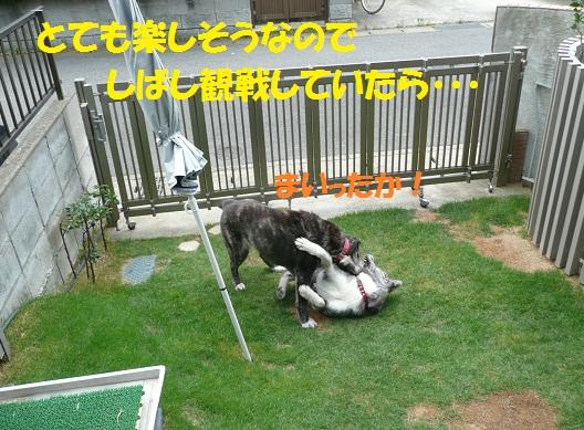 f0121712_22242911.jpg