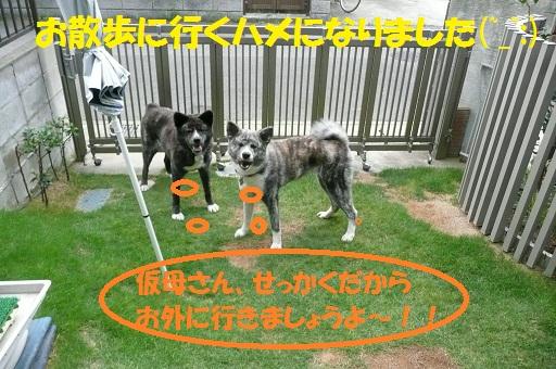 f0121712_22244030.jpg