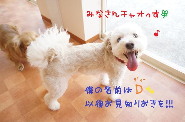d0220513_1913997.jpg