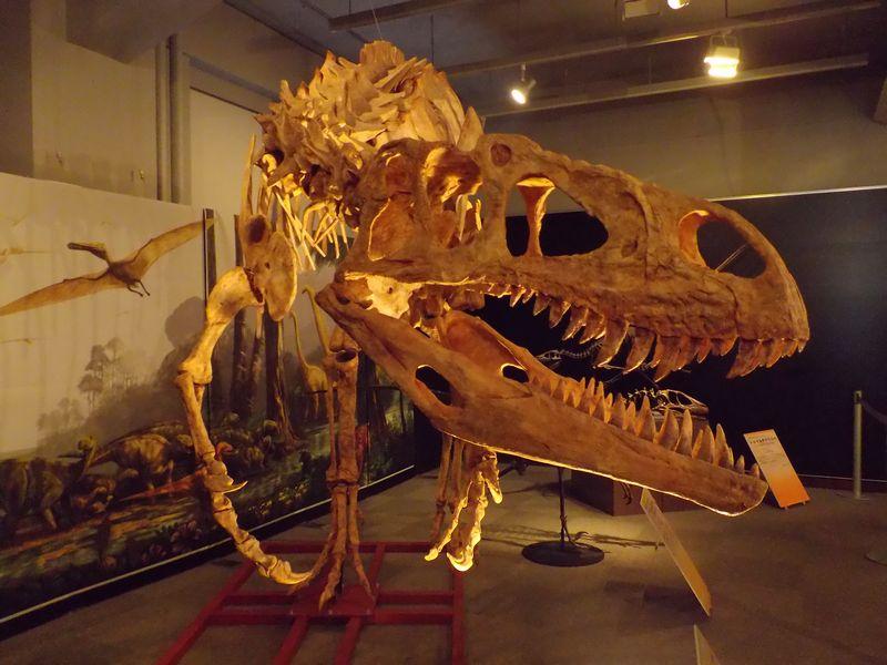 理科教育学会と博物館企画展示「ワニと恐竜」_c0025115_22151387.jpg