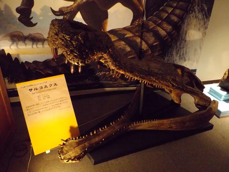 理科教育学会と博物館企画展示「ワニと恐竜」_c0025115_22151889.jpg
