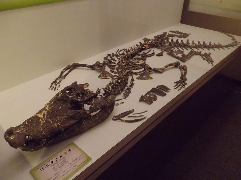 理科教育学会と博物館企画展示「ワニと恐竜」_c0025115_22152161.jpg