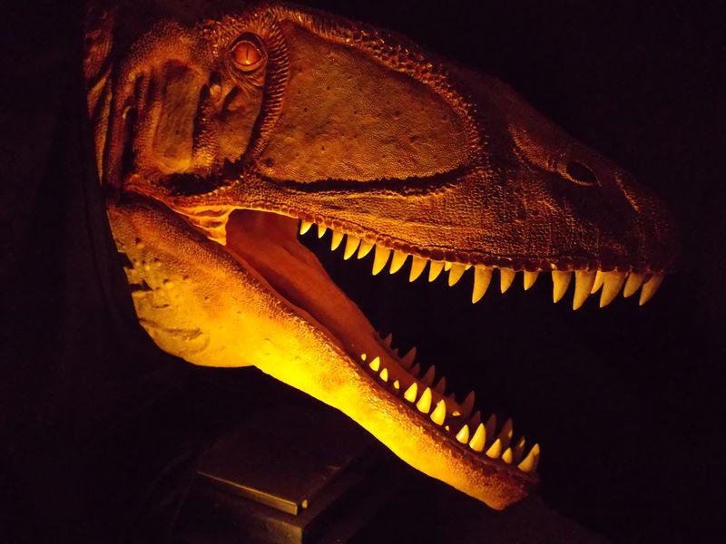 理科教育学会と博物館企画展示「ワニと恐竜」_c0025115_22152456.jpg